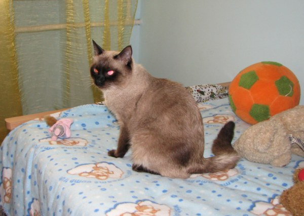 недовольный кот Котя