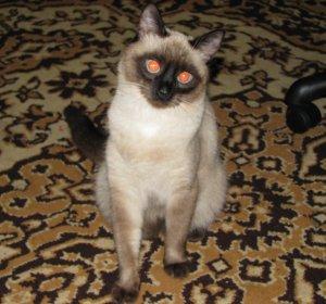 kotya_cat