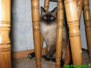 фото Коти собственной персоной