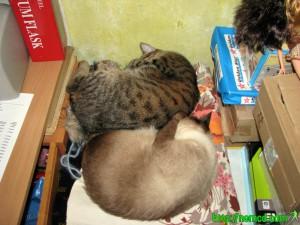 Котя и Чуча скрутились и спят богатырским сном :-)