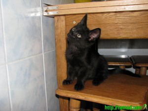 кот Мотя когда был маленьким