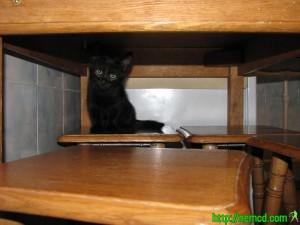 Мотя под столом на кухне. Фото котенка.