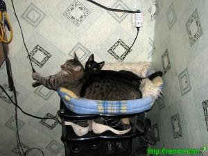 Котенок Мотя (черный) и котенок Чуча