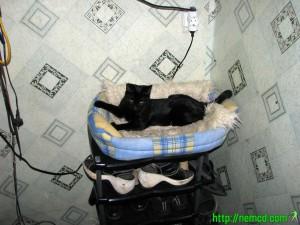 Мотя повзрослел. Фото кота.
