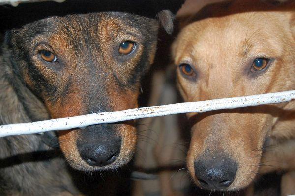 грусные собачьи глаза