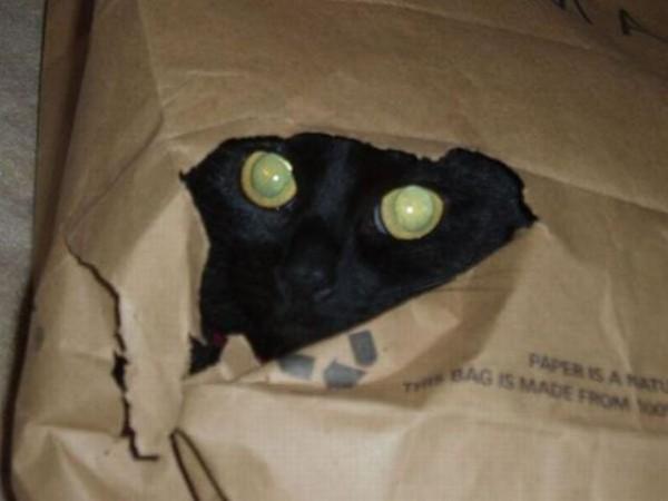 Котя-Мотя - эти глаза напротив
