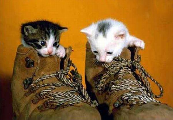 Маленькие котята в башмаках