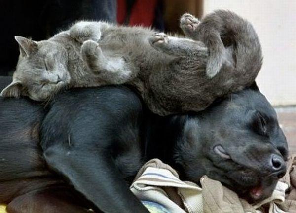 Кот и   собака - друзья навеки