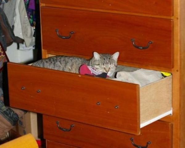 Коты очень любят спать в одежде