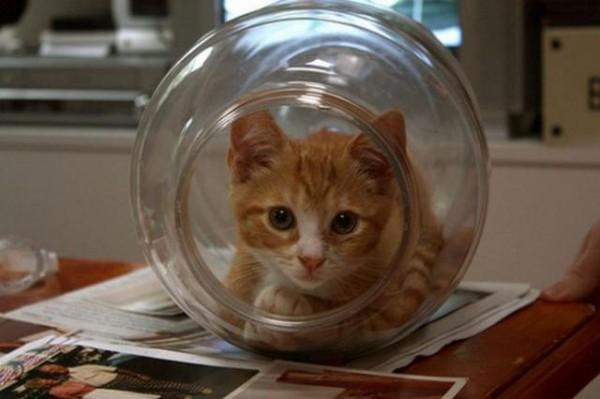 Кот в батискафе