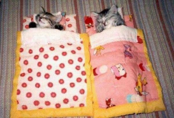 Котята в кроватках