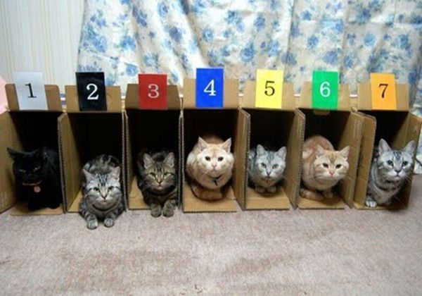 Так и   сколько же у нас котов? Правильно 7!