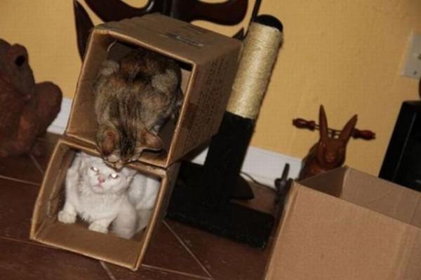 Двухэтажка для котов