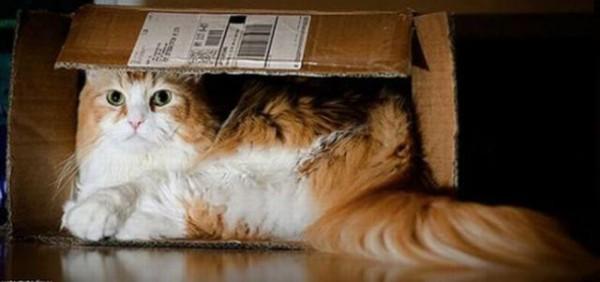 Ну для чего еще нужны коробки?
