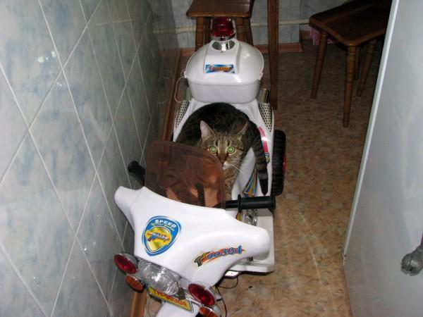 Чуча катается на мотоцикле