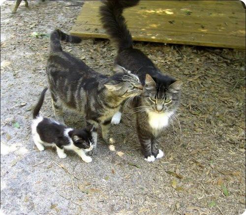 Кошачья ферма (ранчо)