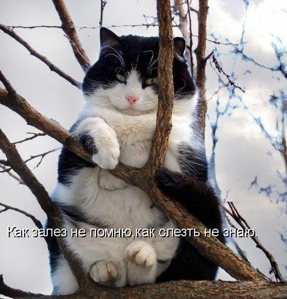 приколы про котов: