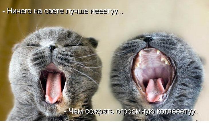 почему зеваешь бывает бесконца раздела