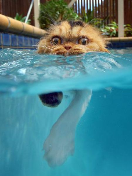 Фото коты в воде