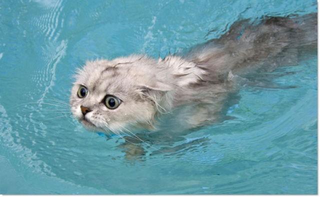 =^_^= Котики =^_^= - Страница 6 Cats_11