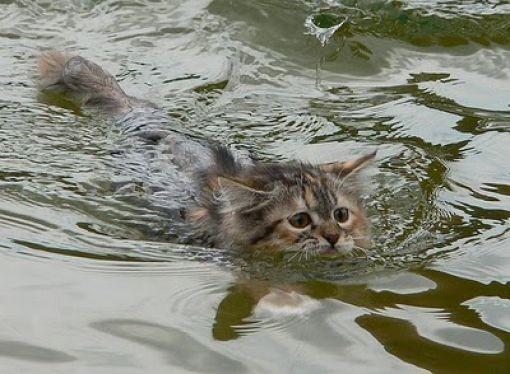 Сосредоточиться и плыть!
