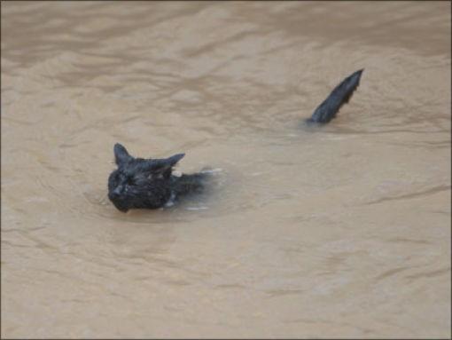 кот в грязной воде