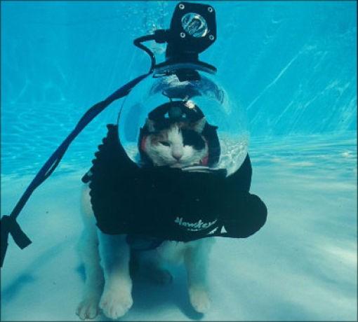 Кот-подводник