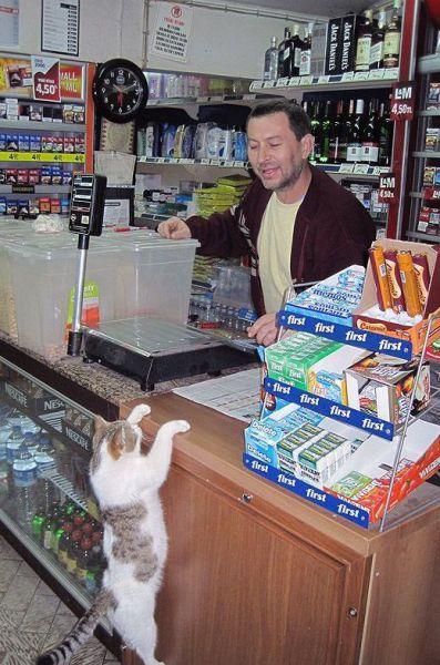 Продавец, которого любят даже кошки