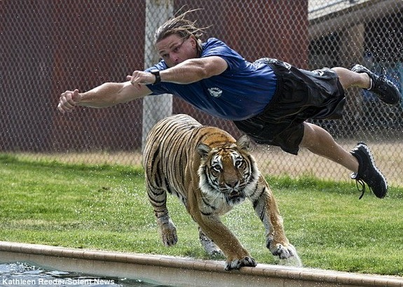 Опасные игры с тиграми