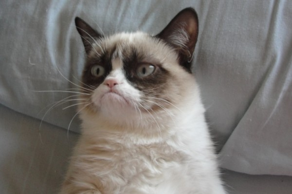 Grumpy Cat 01