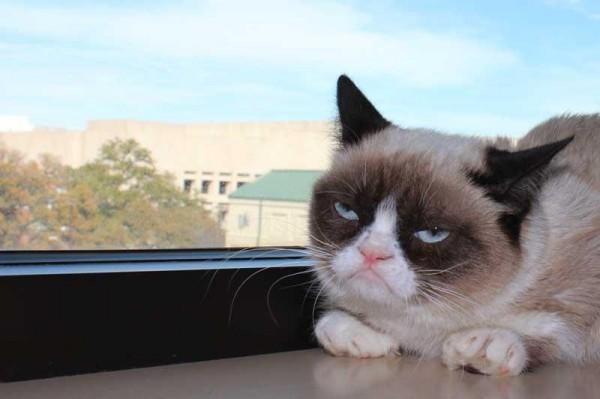Grumpy Cat 02