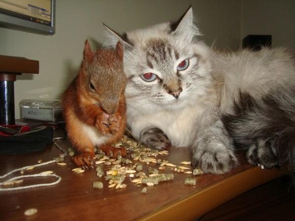 Белка и кот