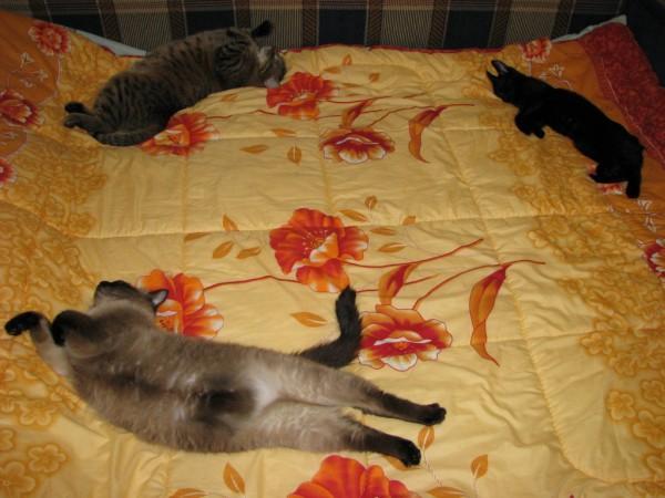 Замечательное трио котов