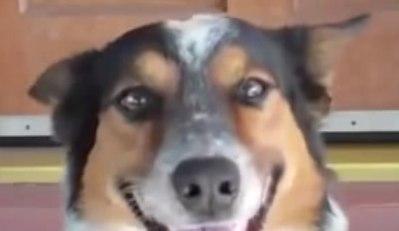 смайл умной собаки