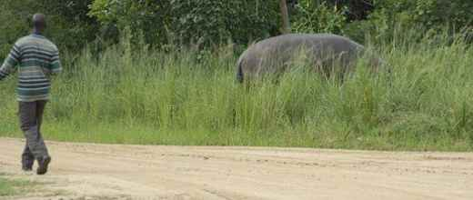Носорог в засаде