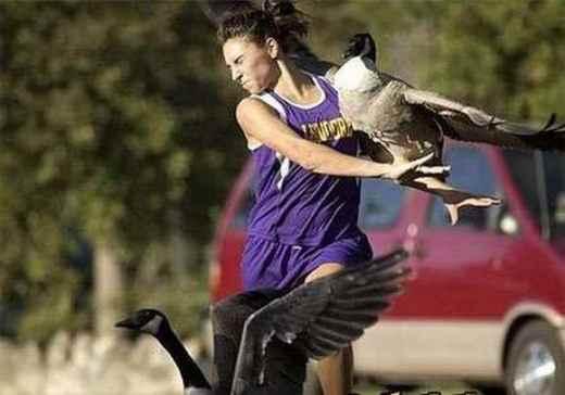Фу-у, Гадкие утки