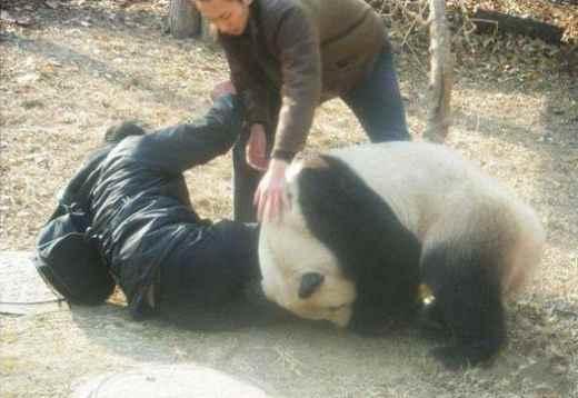А говорили панды медленные!