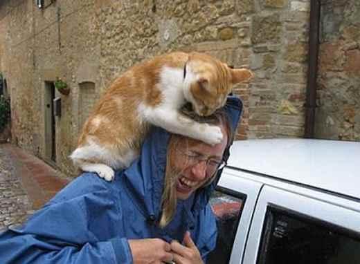 Кошачья месть