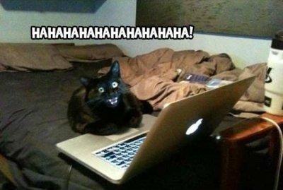 чумачедчий кот