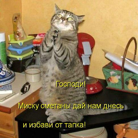 Милый котейка