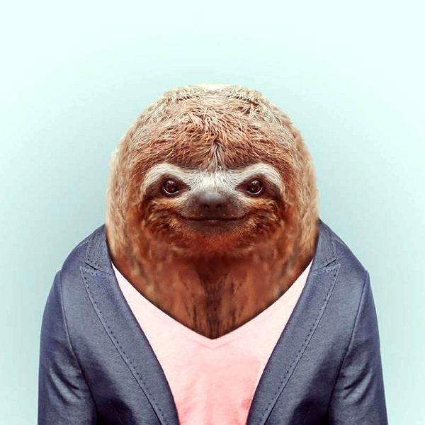 Модный ленивец