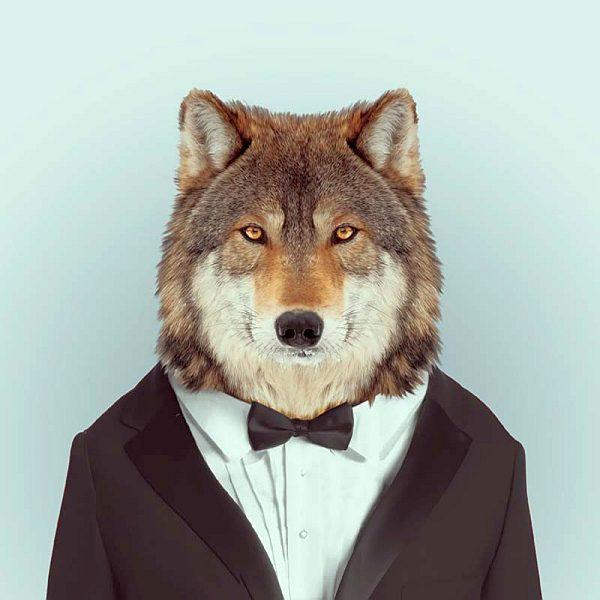 Стильный волк-гангстер или шпион :-)
