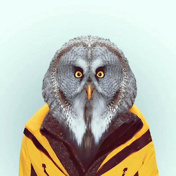 Animals-11