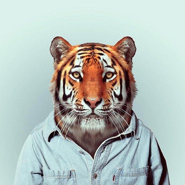 Animals-23