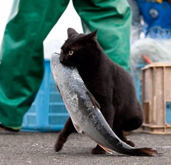 Мотя тащит рыбку