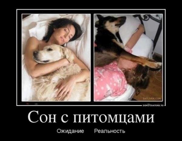 Сон с питомцами, он такой :-)