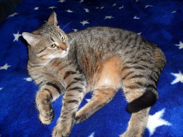 Толстый Чуча кот