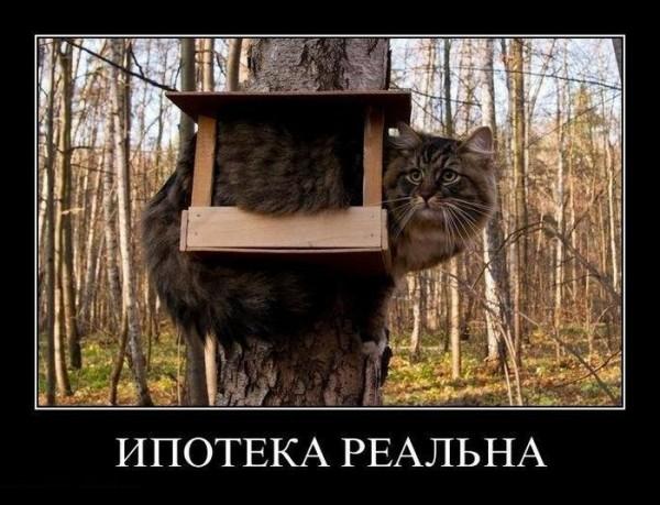 кот взял ипотеку