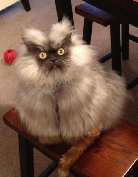 Кот злодей
