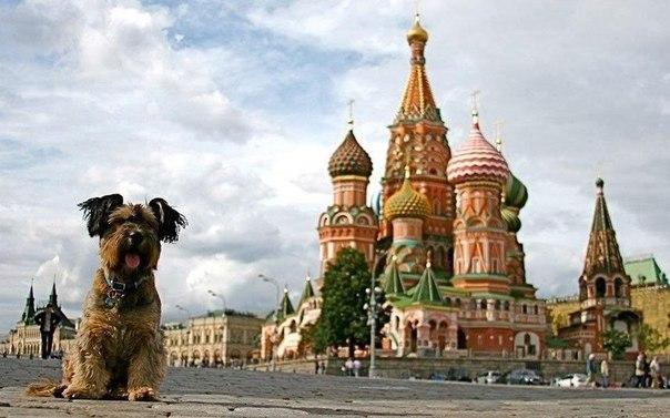 Оскар и Храм Василия Блаженного (Москва)